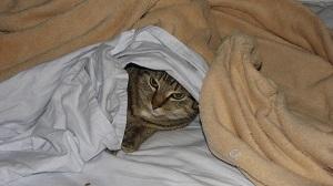 Hope under blankets