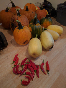 harvest pumpkins, cayenne peppers, and spaghetti squash