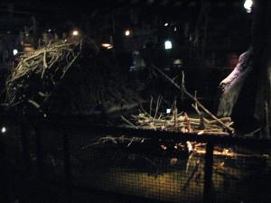 desert nocturnal beaver lodge