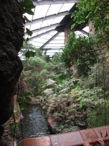 jungle view1