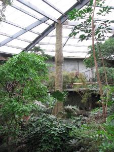 jungle view2