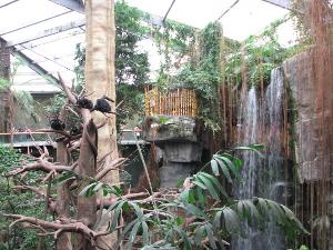 jungle view3