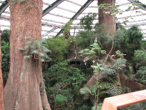 jungle view4