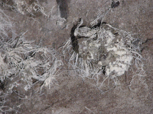 closeup alien fungus on cat poop in basement