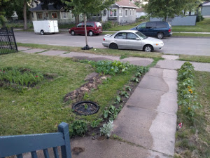 front yard after watering