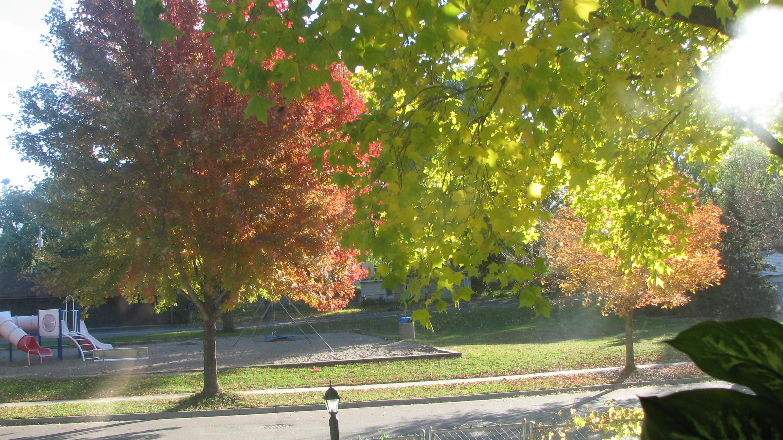 foliage 2013-10-26