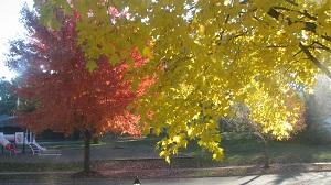 foliage 2013-11-02